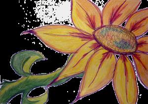 Sunflower-medium-size-02